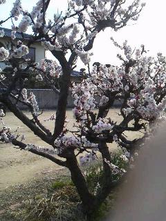 春の訪れ…